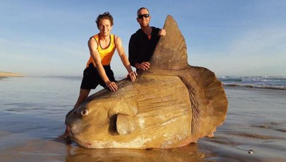 Uszadékfa kinézetű óriási halat mosott ki a víz Ausztrália partjainál