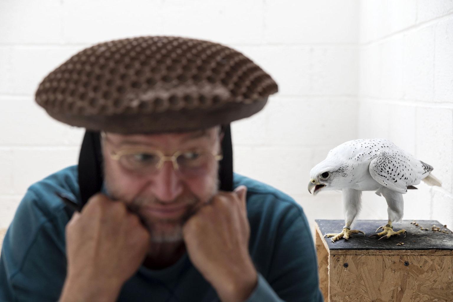 Elgin, 2019. április 12. A World Press Photo Alapítvány által közreadott képen Howard Waller sólyomtenyésztő a fején viselt különleges spermagyűjtő sapkával csalogat egy vadászsólymot, hogy ott ejakuáljon a skóciai Elginben. A fénykép a National Geographicben megjelent Falcons and the Arab Influence című riport része, amellyel Brent Stirton, a Getty Images riportere elnyerte a természetfotó sorozat kategória első díját a World Press Photo nemzetközi sajtófotóversenyen 2019. április 11-én. MTI/AP/Brent Stirton