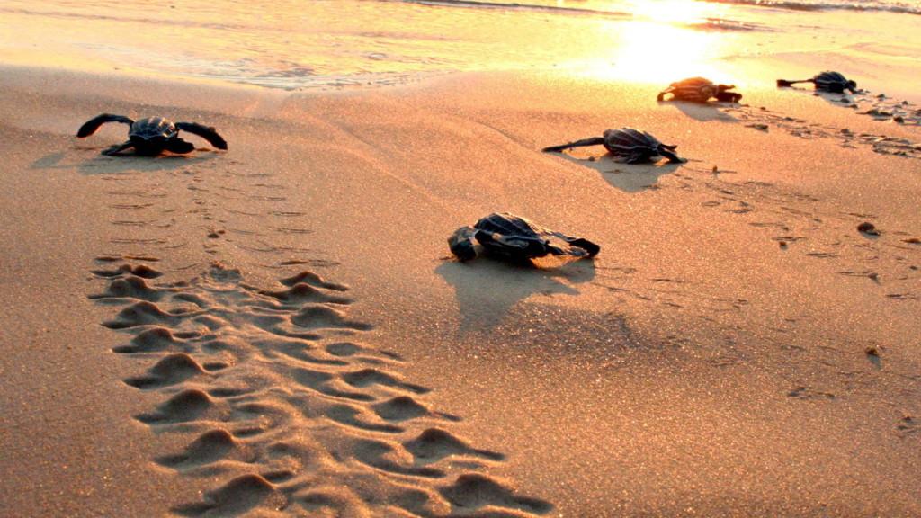 Teknőcfészek megpiszkálásáért vettek őrizetbe egy nőt Floridában