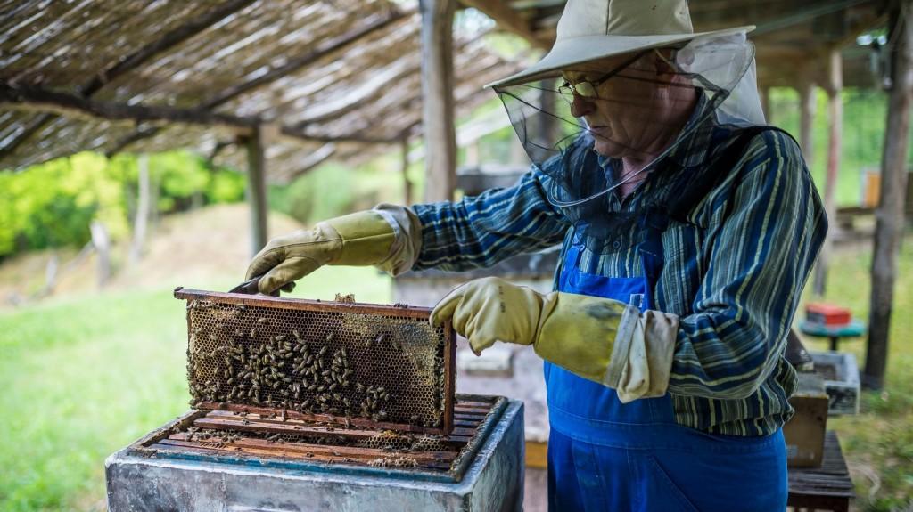 Támogatásokkal segítik a méhészetek versenyképességét