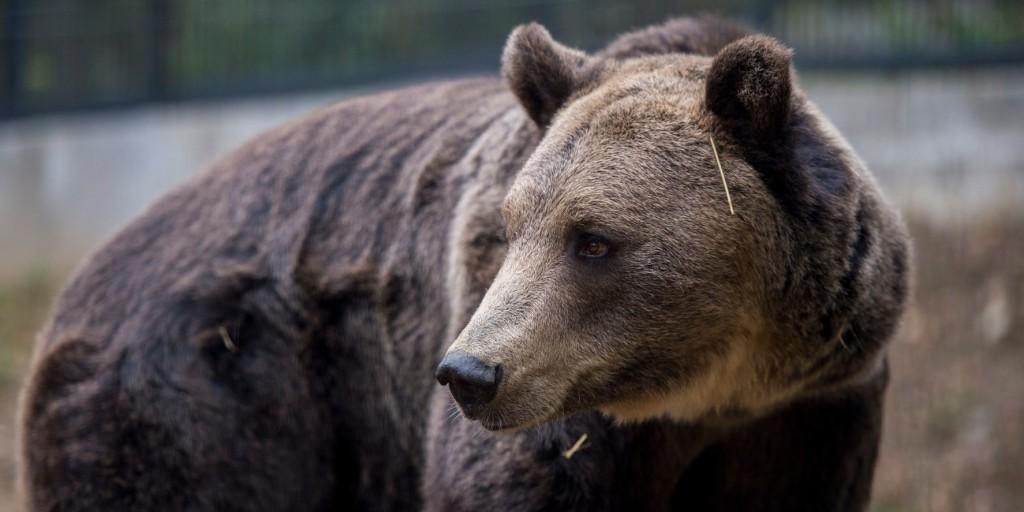 Beváltotta feleségének tett ígéretét - 270 milliót adományozott az állatkertnek