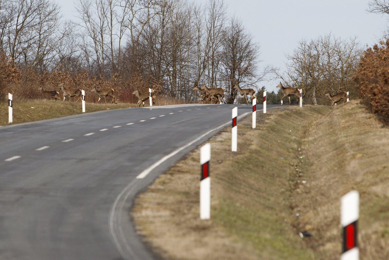 A kép illusztráció (Fotó: MTI/Varga György)