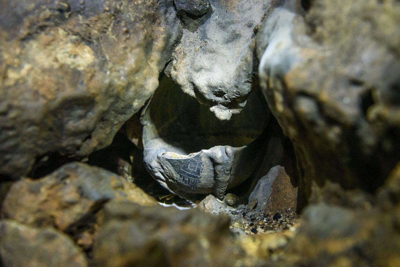 Aggtelek, 2019. július 10. Középső újkőkori, becseppkövesedett edény az aggteleki Baradla-barlangban 2019. július 9-én. A Baradla Európa egyik leggazdagabb barlangi lelőhelye az újkőkori és a késő bronzkori leleteknek. MTI/Komka Péter