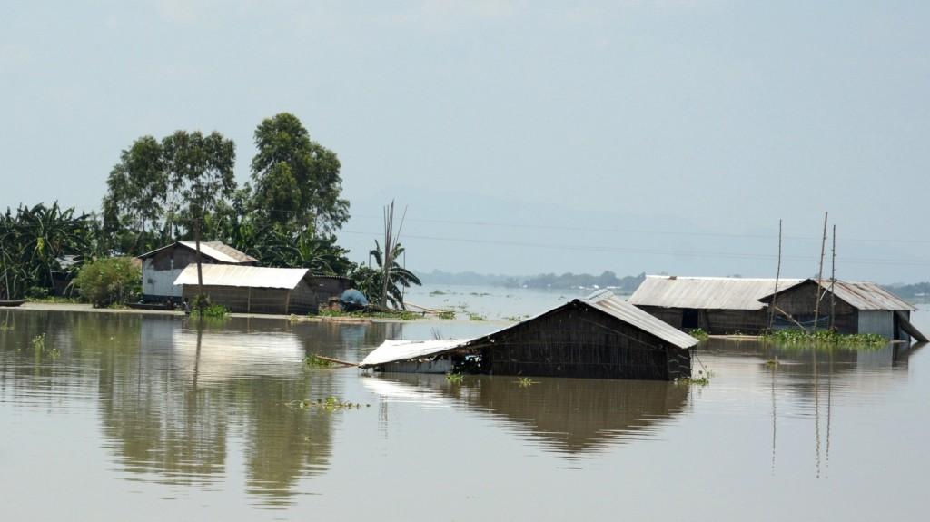 Tucatnyi ritka, indiai orrszarvú lett az Indiában pusztító áradások áldozata