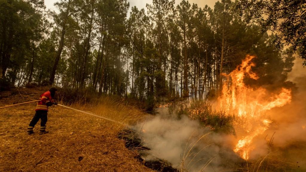 Hétezer hektár erdő égett le a portugál erdőtüzekben