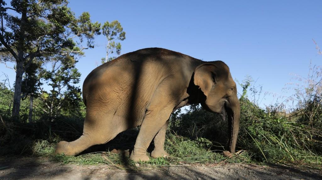 Nem tiltja be teljesen az elefántcsont-kereskedelmet a washingtoni egyezmény