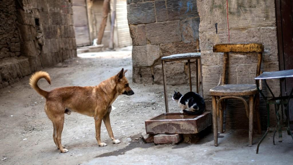 Zseniális szaglású kutyák is bemutatkoztak az Örökbefogadott Állatok Napján