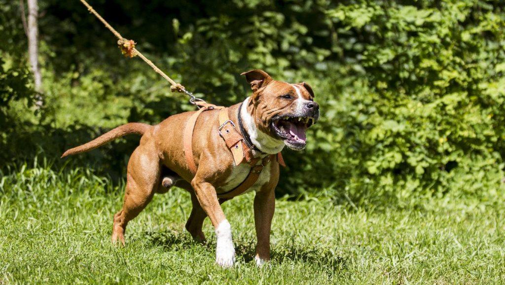 Várandós nőt öltek meg kutyák egy francia erdőben