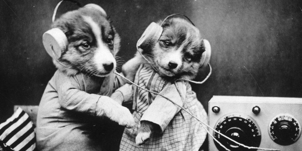 Az otthon hagyott, ugató kutyosoknak talált megoldást a Spotify