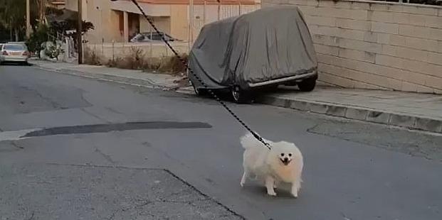 A drónnal sétáltatott kiskutyánál ma nem lát megdöbbentőbbet