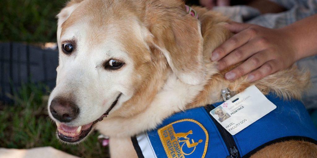 Terápiás kutyus segíti át a legkeményebb pillanatokon a túlhajszolt kórházi dolgozókat