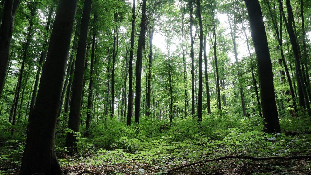 Megnyílt Szlovákia első erdőfürdője