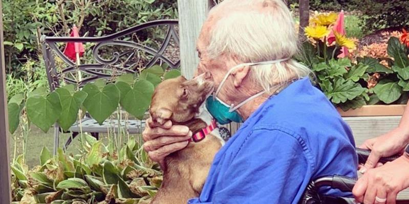Kiskutyája mentette meg az agyvérzést kapott 86 éves veterán életét