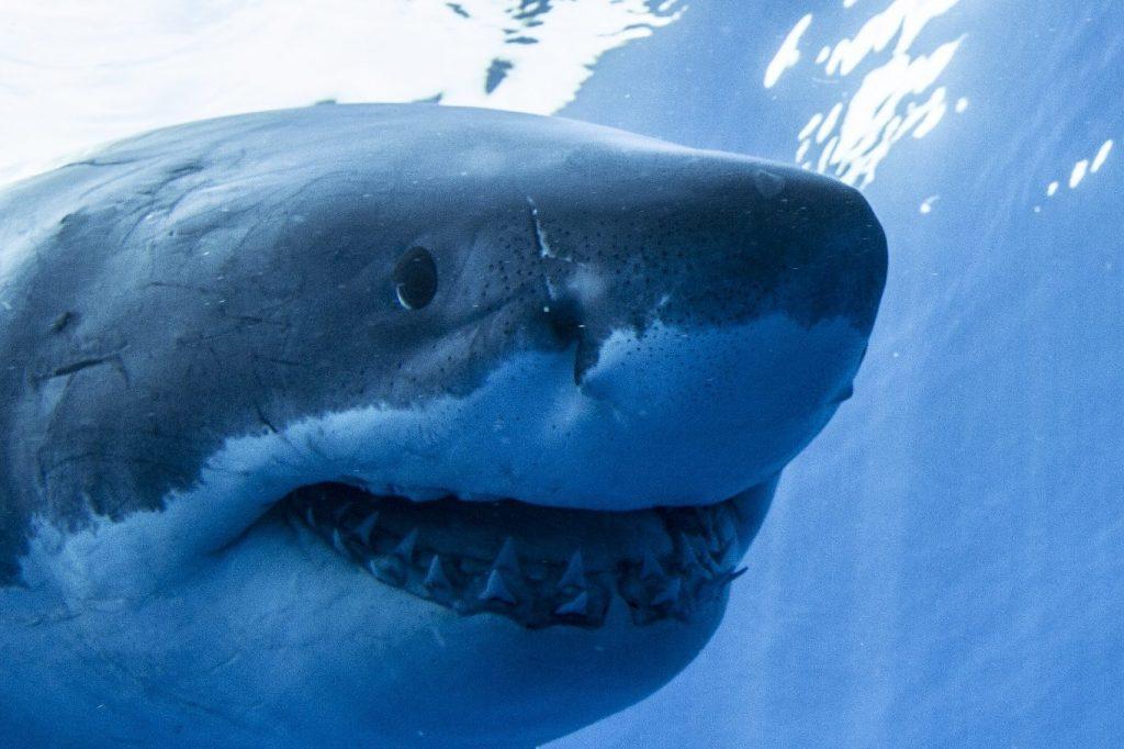 A parttól pár méterre ölt a cápa, a férfinek esélye sem volt
