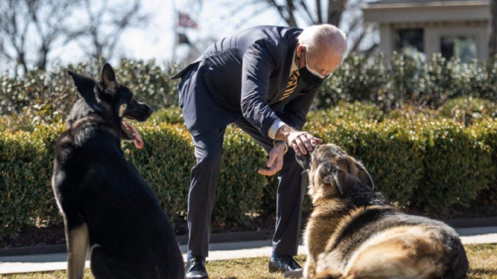 Biden kutyáinak menniük kell a Fehér Házból