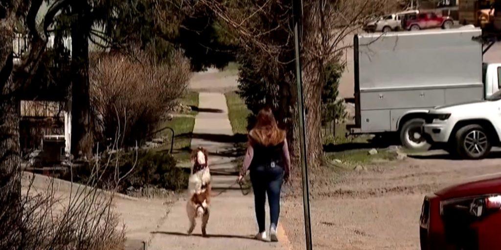 A nap videója: ez a kutyus inkább két lábon jár sétálni