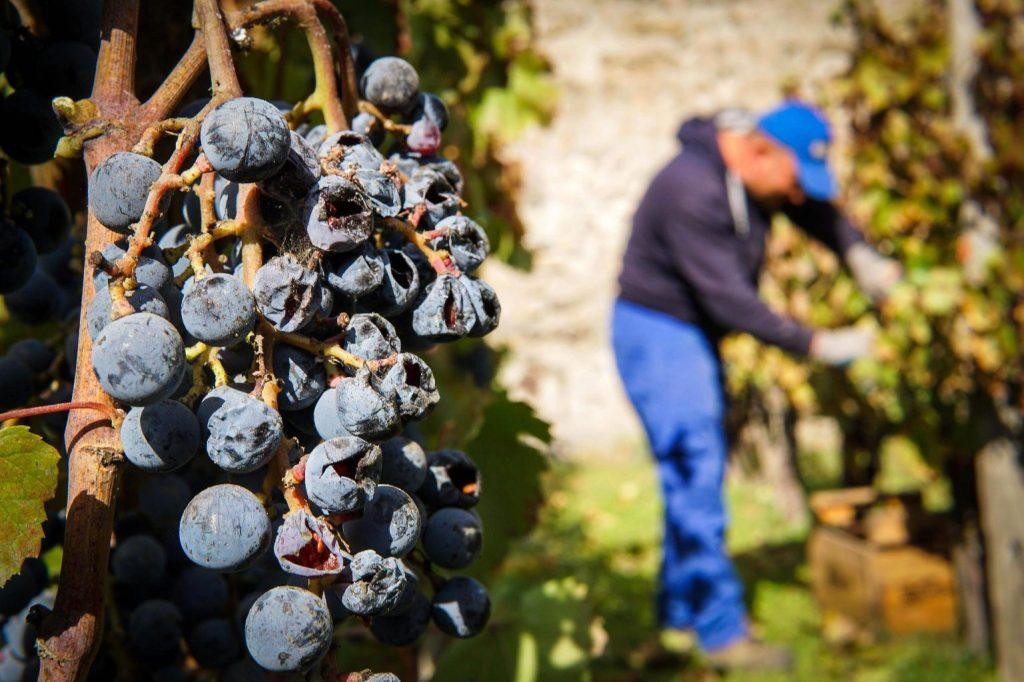 Nem tudják eldönteni az olaszok, hogy a bor vagy a habzóbor fontosabb