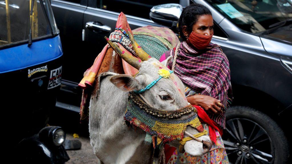 Vizeletet isznak és trágyában fürdenek az indiaiak a vírus megelőzése érdekében