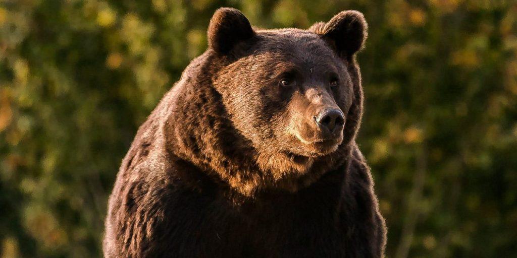 Medve támadott egy gazdára a hargitai Kápolnásfalun