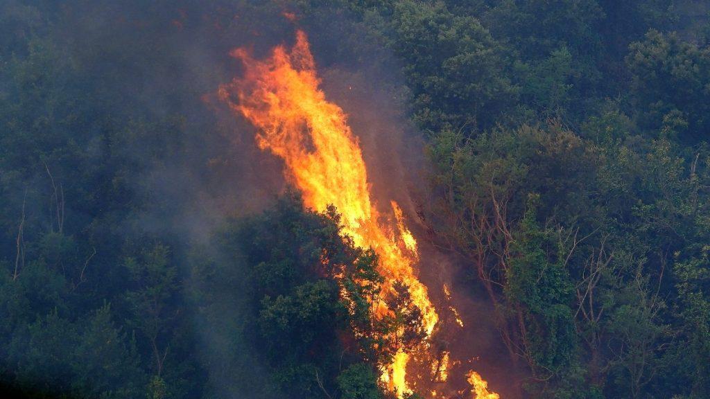 Megmentenének egy szénné égett évezredes olajfát